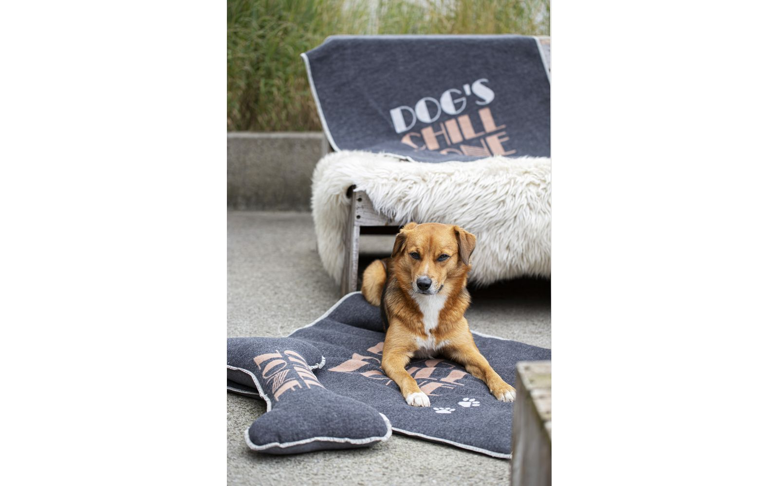 """pet blanket """"dog's chill zone""""_small"""